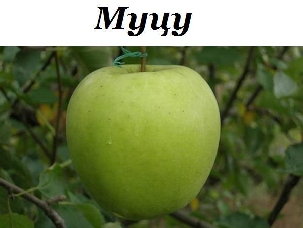 Сорт яблок Мутсу