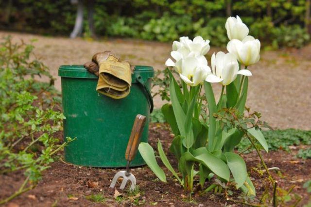 Благоприятные дни для посадки тюльпанов,.