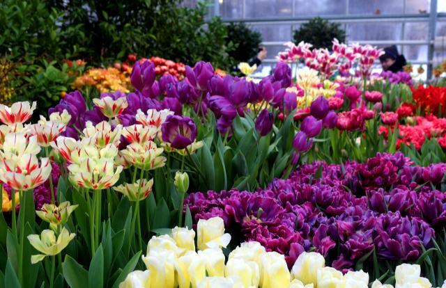 Благоприятные дни для посадки тюльпанов.