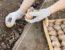 Благоприятные дни для посадки картофеля в 2019 году