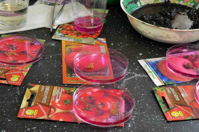 семена-помидор