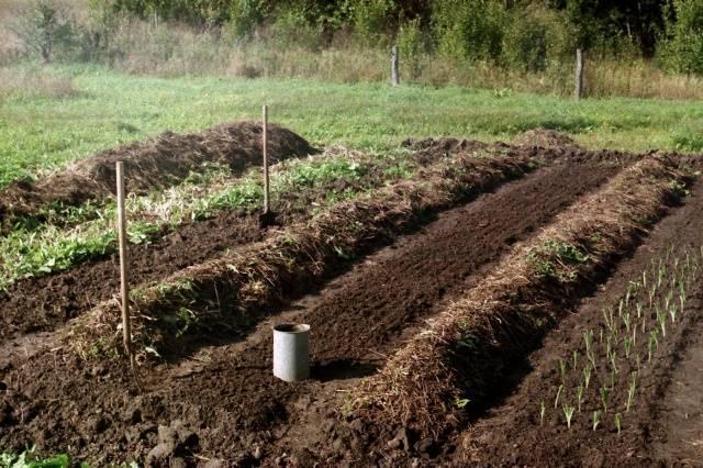 клубника-почва
