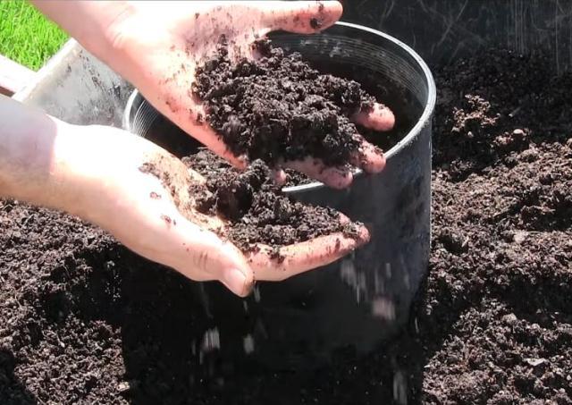 почва-баклажан
