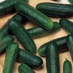 Огурцы Ацтек F1: описание сорта, выращивание, фото
