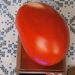 Томат Астраханский: описание сорта, выращивание, уход, фото