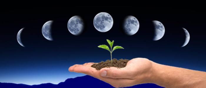 Лунный календарь цветовода на май 2019 года: благоприятные дни