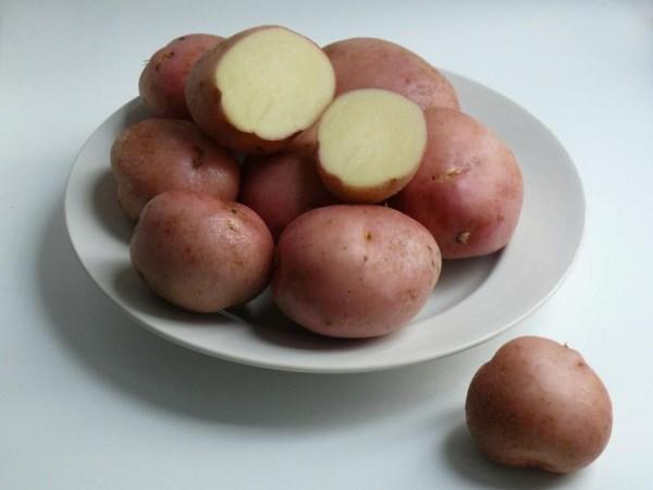 Сорт картофеля Рамона