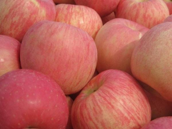 Сорта сладких яблонь