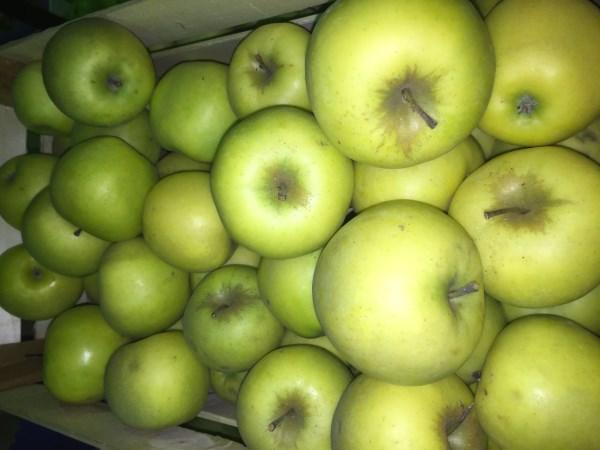 Сорт яблок Митсу