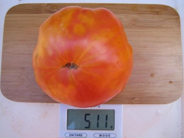 Вес томата Загадка природы