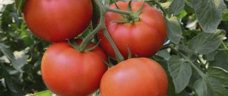 Благоприятные дни для посадки помидоров в 2020 году на рассаду