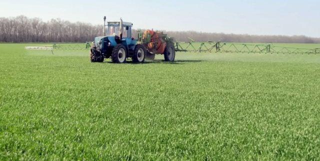 посадка пшеницы.,..