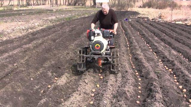 посадки картофеля,