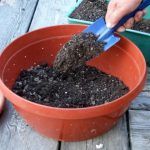 Как подготовить почву для посадки баклажан