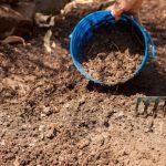 Как подготовить почву для посадки лука весной