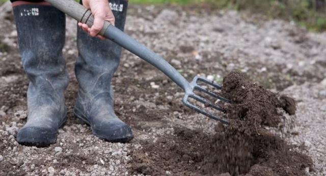 почва-лук