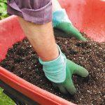 Как подготовить почву для посадки роз весной