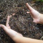 Как подготовить почву для посадки рассады помидоров