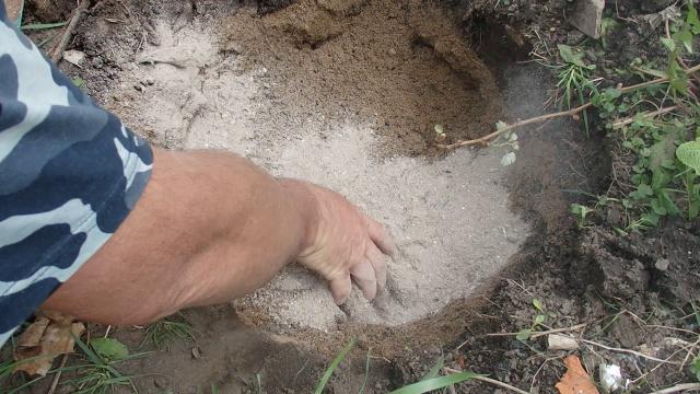 Как подготовить почву для посадки яблони