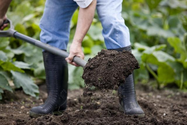 яблоня-почва