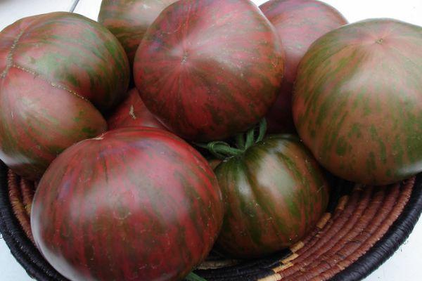 Томат Беркли Тай Дай: описание сорта, выращивание, уход, фото