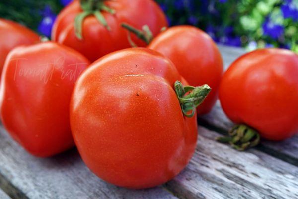 Томат Атоль: описание сорта, характеристики, фото, выращивание