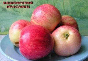 Яблоня зимостойкая  Башкирский красавец: описание сорта, характеристики, выращивание