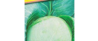 Капуста Циклоп F1: описание сорта, выращивание, уход, фото