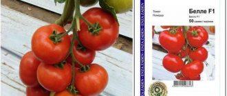 Раннеспелый томат Белле F1: описание сорта