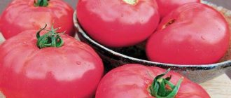 Томат Бугай розовый: описание сорта