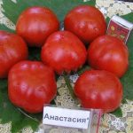 Томата Анастасия: описание сорта, выращивание, фото