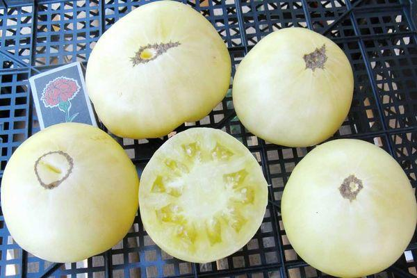 Томат Белый Сахар: описание сорта, выращивание, фото