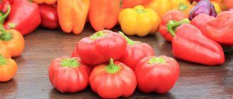 Лучшие урожайные сорта перца: описание, фото