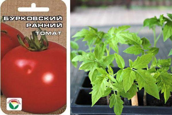 Томат Бурковский ранний: описание сорта