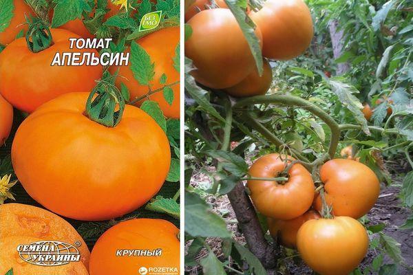 Томат Апельсин: описание сорта, выращивание, фото