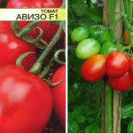 Томат Авизо f1: характеристика и описание сорта, фото