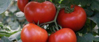 Томат Барин F1: описание сорта, характеристики, фото, выращивание