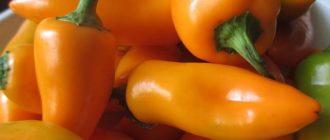 Перец Лисичка: описание сорта, посадка и уход