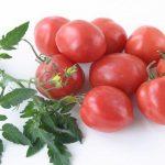 Томат Амулет: описание сорта, выращивание, уход, фото