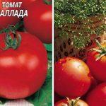 Томат Баллада: описание сорта, отзывы, фото, посадка и уход