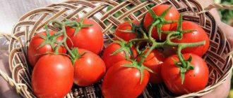 Томата Бенито f1: описание сорта, выращивание, уход, фото