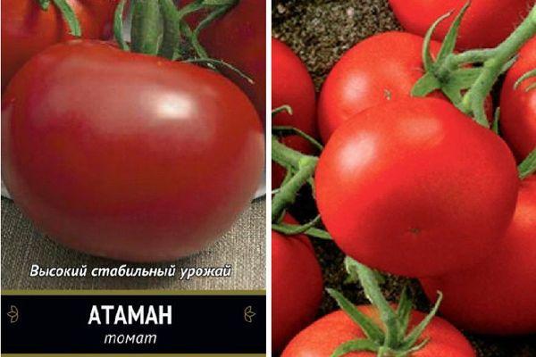 Томат Атаман: описание сорта