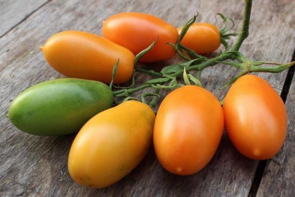 Томат Оранжевый банан : описание сорта, выращивание, фото