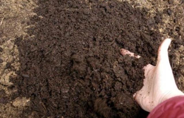 почва-свеклы