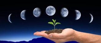 Лунный календарь цветовода на апрель 2020 года: благоприятные дни