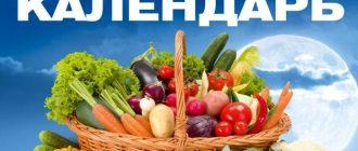 Лунный календарь огородника на август 2020 года: благоприятные дни