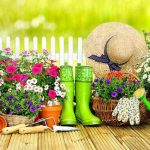 Лунный календарь цветовода на сентябрь 2020 года: комнатные растения и цветы