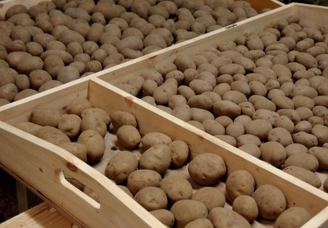 hranenie-kartofelya