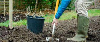 Когда сажать яблони осенью 2020 года: благоприятные дни по лунному календарю