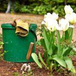 Когда сажать тюльпаны осенью 2020 года: благоприятные дни по лунному календарю